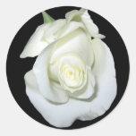 Rosa blanco pegatinas redondas