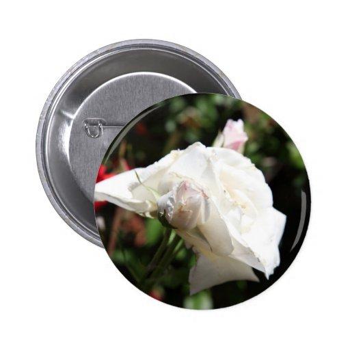 Rosa blanco pin redondo 5 cm