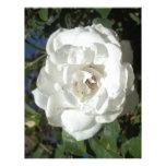 Rosa blanco plantilla de membrete