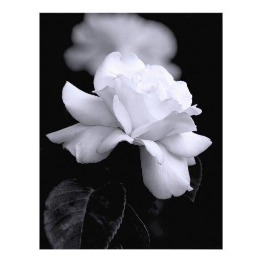 Rosa blanco plantillas de membrete