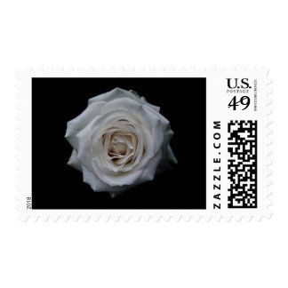 Rosa blanco sellos