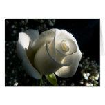 Rosa blanco tarjeta