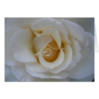 Rosa blanco tarjetas