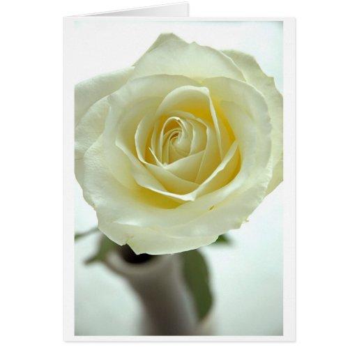 Rosa blanco tarjetón