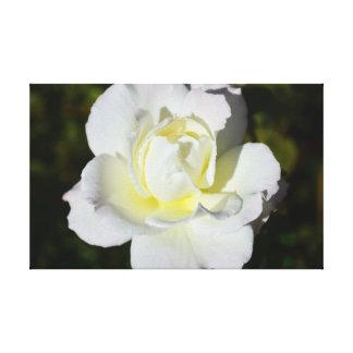 Rosa blanco y amarillo impresión en lona estirada