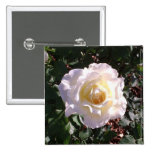 Rosa blanco y fotografía color de rosa del brote pin