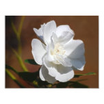 Rosa blanco y significado comunicado
