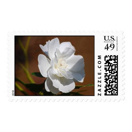 Rosa blanco y significado franqueo
