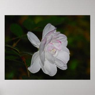 Rosa blanco y significado poster