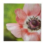 Rosa bonito de la flor de la anémona azulejos ceramicos