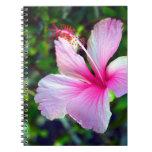 Rosa brillante de la flor del hibisco contra verde libretas espirales