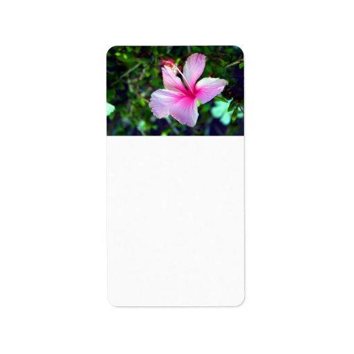 Rosa brillante de la flor del hibisco contra verde etiquetas de dirección