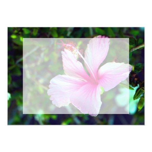 """Rosa brillante de la flor del hibisco contra verde invitación 5"""" x 7"""""""