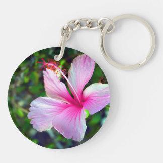 Rosa brillante de la flor del hibisco contra verde llavero