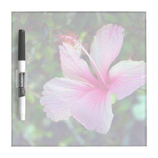 Rosa brillante de la flor del hibisco contra verde pizarras blancas