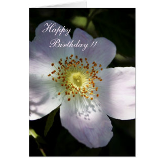 Rosa Canina - Dog Rose Card