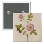 Rosa Canina - Dogrose and Caterpillar (pencil & w/ 2 Inch Square Button
