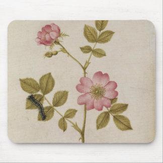 Rosa Canina - Dogrose and Caterpillar (pencil & w/ Mouse Pad