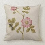Rosa Canina - Dogrose and Caterpillar (pencil & w/ Pillow