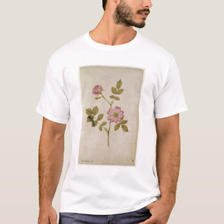 Rosa Canina - Dogrose and Caterpillar (pencil & w/ T-Shirt