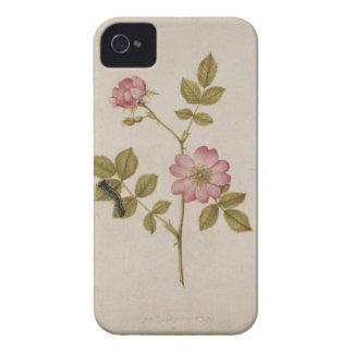 Rosa Canina - Dogrose y Caterpillar (lápiz y con Case-Mate iPhone 4 Cobertura