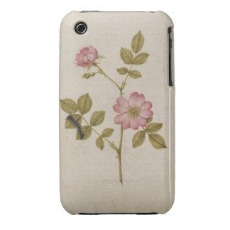 Rosa Canina - Dogrose y Caterpillar (lápiz y con iPhone 3 Cárcasa