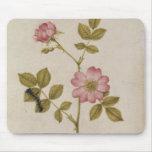 Rosa Canina - Dogrose y Caterpillar (lápiz y con Mouse Pads