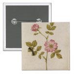 Rosa Canina - Dogrose y Caterpillar (lápiz y con Pin Cuadrado