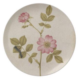 Rosa Canina - Dogrose y Caterpillar (lápiz y con Plato De Comida