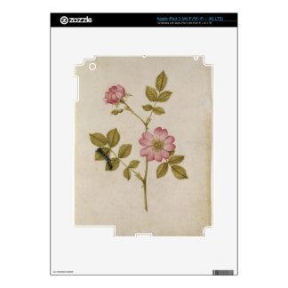 Rosa Canina - Dogrose y Caterpillar (lápiz y con iPad 3 Skin
