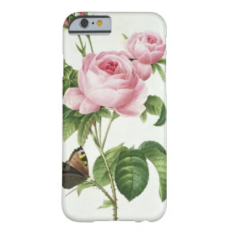 Rosa Centifolia Barely There iPhone 6 Case