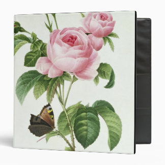 Rosa Centifolia Binder