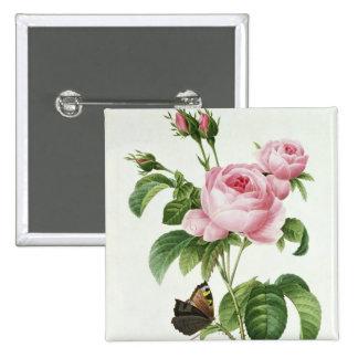 Rosa Centifolia Pin