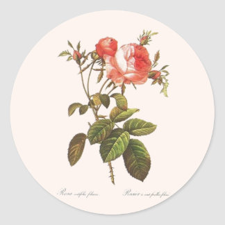 Rosa Centifolia Foliacea Classic Round Sticker