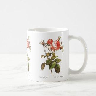 Rosa Centifolia Foliacea Coffee Mug