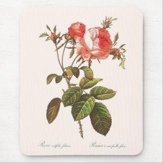 Rosa Centifolia Foliacea Mouse Pad