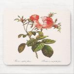 Rosa Centifolia Foliacea Tapetes De Raton
