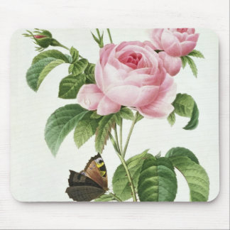 Rosa Centifolia Mouse Pad