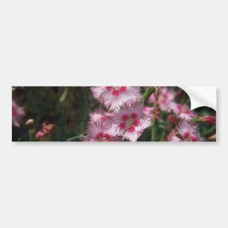 Rosa claro rosado, (clavel Plumarus) flores Pegatina De Parachoque