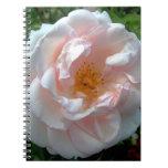 Rosa color de rosa abierto