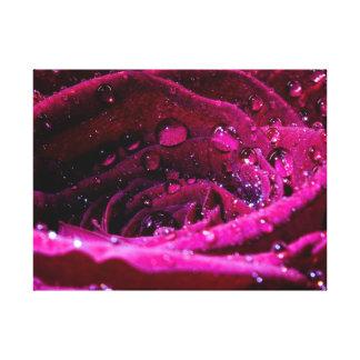 Rosa con Wassertropfen Impresion De Lienzo
