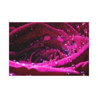 Rosa con Wassertropfen Lona Envuelta Para Galerías