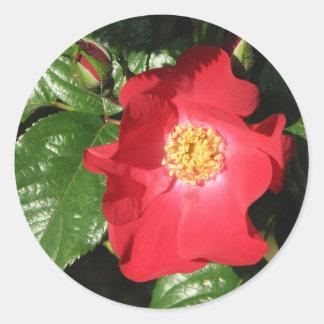 Rosa de arbusto del azafrán 223 etiqueta redonda