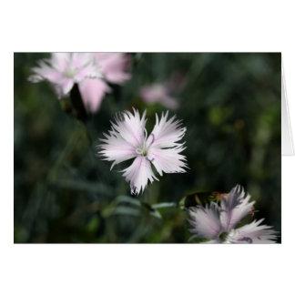 Rosa de Cheddar (gratianopolitanus del clavel) Tarjeta De Felicitación