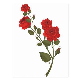 Rosa de desierto