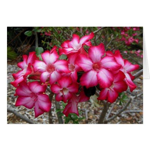 Rosa de desierto tarjeta de felicitación