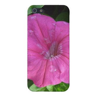 Rosa de Dewey iPhone 5 Carcasa