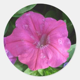 Rosa de Dewey Pegatina Redonda