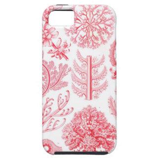 Rosa de Haeckel iPhone 5 Funda