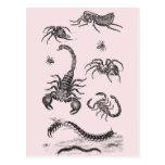 Rosa de la pulga de la araña del escorpión de los postal